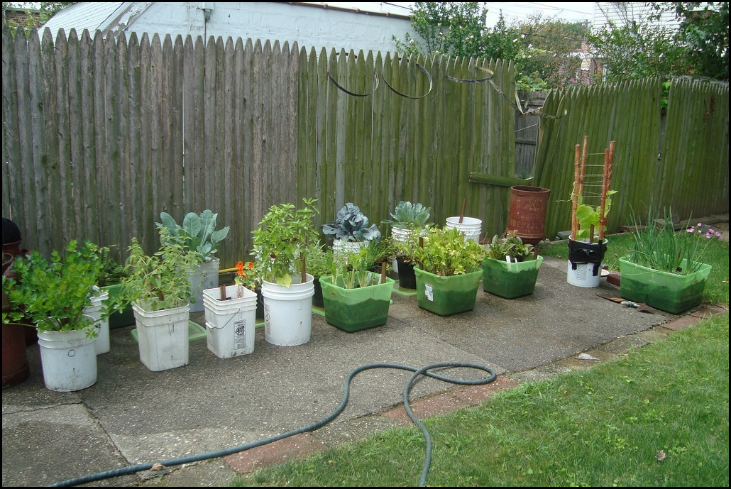 6 Quick Steps For Container Vegetable Gardening