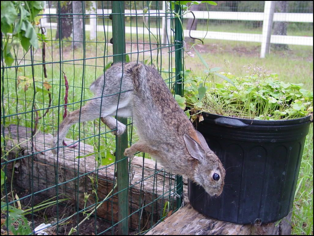 How to keep deer out of vegetable garden 5 for How to keep deer out of a garden