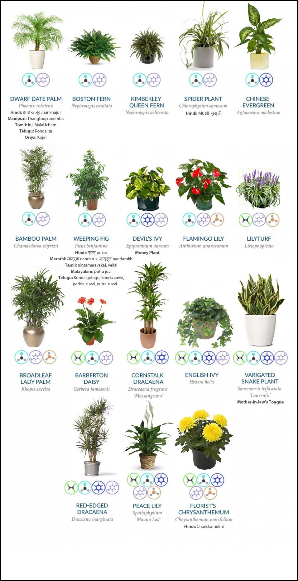 Best Houseplants For Clean Air 1
